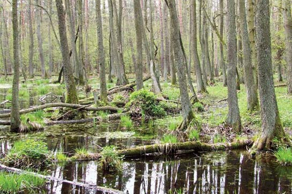 Kampinos National park warsaw